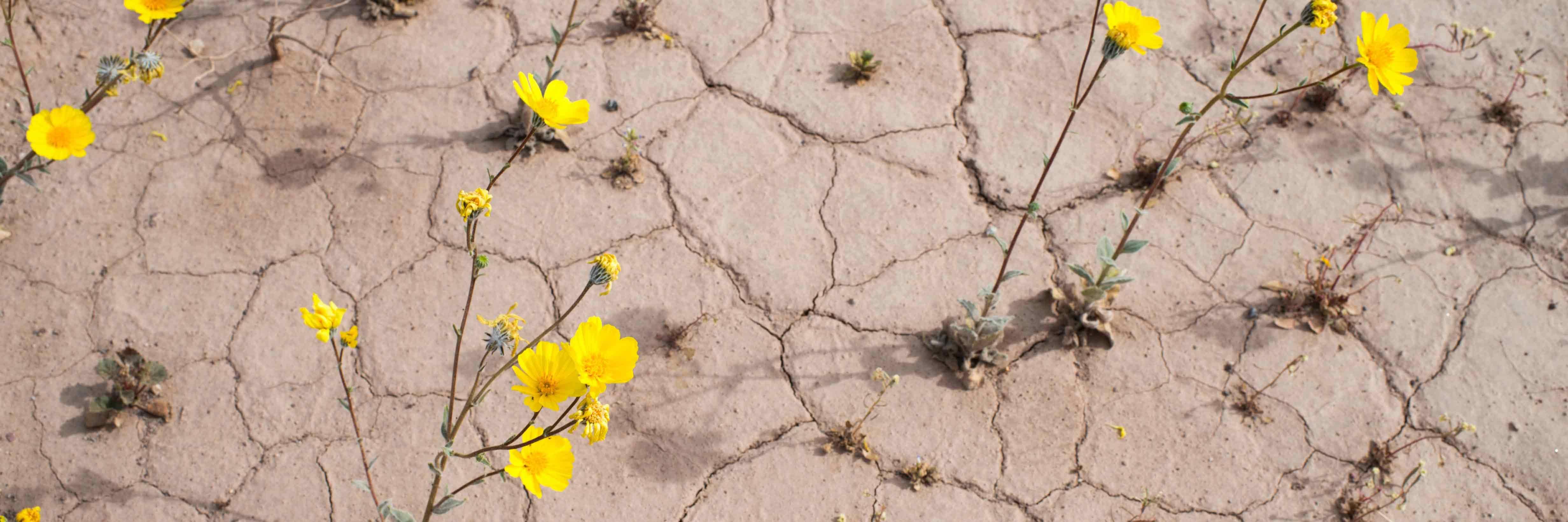 Colorado Springs Death Valley