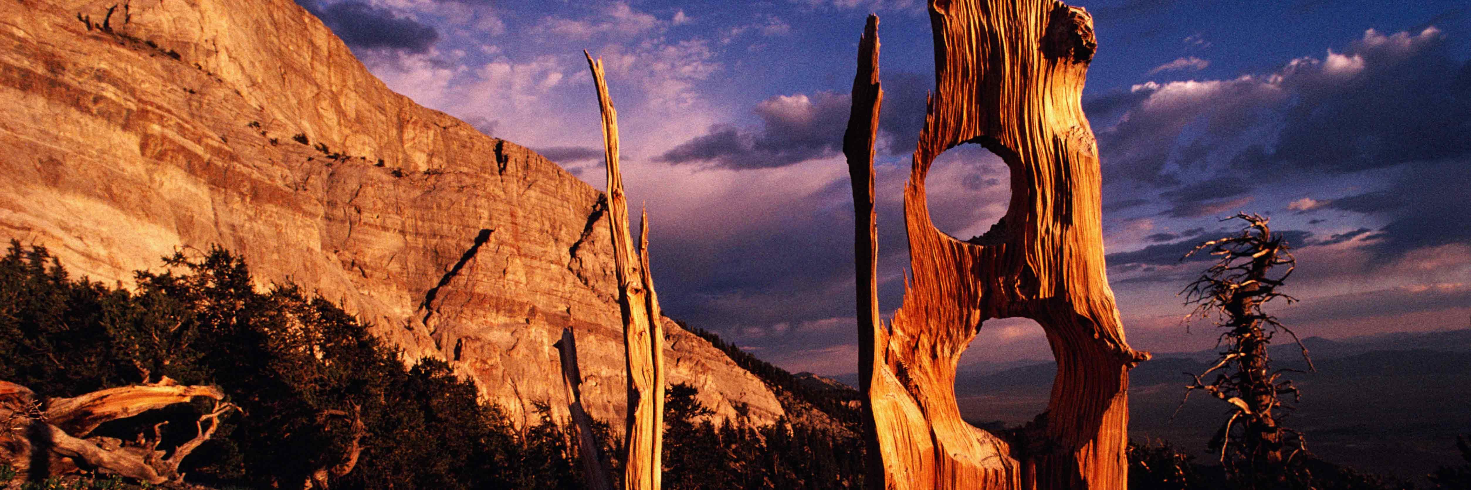 Colorado Springs great basin