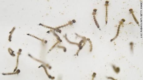 zika in colorado / florida colorado springs review
